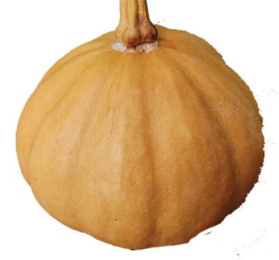 Appalacian pumpkin